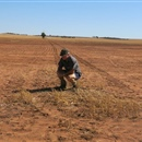 Tree planting in challenging WA soil